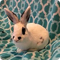 Adopt A Pet :: Knox - Watauga, TX