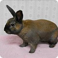 Adopt A Pet :: Baldwin - Portland, OR