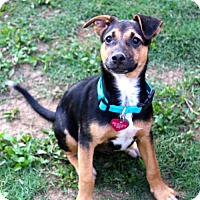 Adopt A Pet :: EMMY LOU - Olive Branch, MS