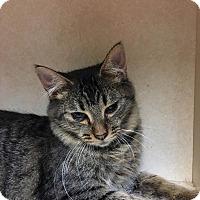 Adopt A Pet :: Kat - Westminster, CA