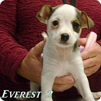 Adopt A Pet :: D10 Litter-Everest - Livonia, MI