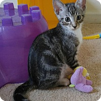 Adopt A Pet :: Tabbies - Virginia Beach, VA