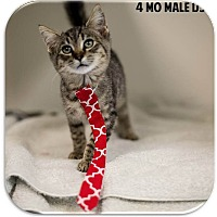 Adopt A Pet :: Quinn - Washington, DC