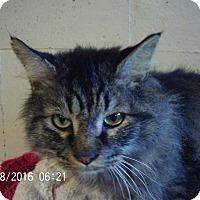 Adopt A Pet :: Abner - Bridgeton, MO