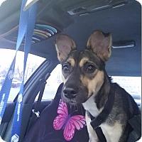 Adopt A Pet :: Diva - Louisville, KY