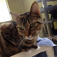 Adopt A Pet :: Zebra - Port Richey, FL