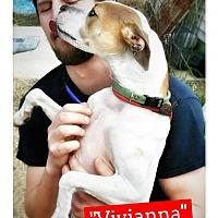 Adopt A Pet :: Vivianna - Seaford, DE