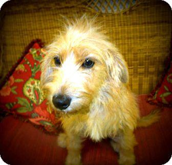 Terrier (Unknown Type, Medium) Mix Dog for adoption in Gadsden, Alabama - Hannah