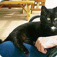 Adopt A Pet :: Theo - Acme, PA