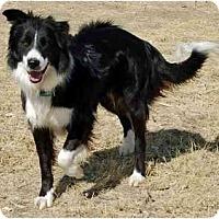 Adopt A Pet :: Ladd - Glenrock, WY