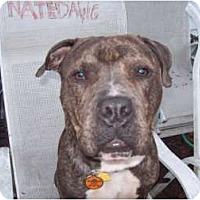 Adopt A Pet :: JACK - Dennis, MA