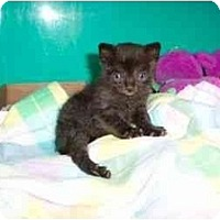Adopt A Pet :: Licorice - Secaucus, NJ