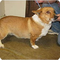 Adopt A Pet :: Steve - Inola, OK