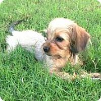 Adopt A Pet :: Tate - Austin, TX