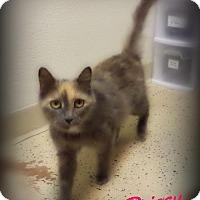 Adopt A Pet :: Prissy - Pekin, IL