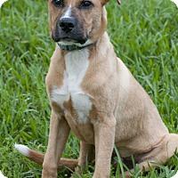 Adopt A Pet :: Roman - Norwalk, CT