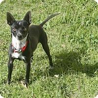 Adopt A Pet :: Nico - Lufkin, TX