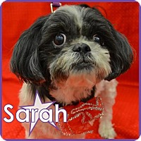 Adopt A Pet :: Sarah - Excelsior, MN