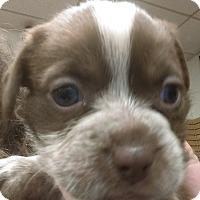Adopt A Pet :: Burnett - Ogden, UT