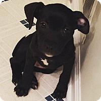 Adopt A Pet :: Candy(In foster) - Muskegon, MI