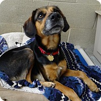 Adopt A Pet :: Dakota - Seal Beach, CA