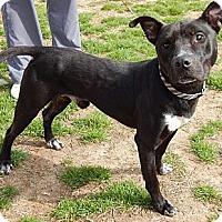 Adopt A Pet :: Pete(L)(50 lb) Fun Family Pet! - SUSSEX, NJ
