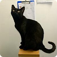 Adopt A Pet :: Georgie - Novato, CA
