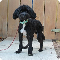 Adopt A Pet :: Churchill - 7 pounds - Los Angeles, CA