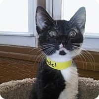 Adopt A Pet :: Gretel - Atlanta, GA