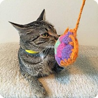 Adopt A Pet :: Vida - Hanna City, IL