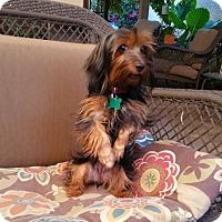 Adopt A Pet :: Bunny - La Verne, CA