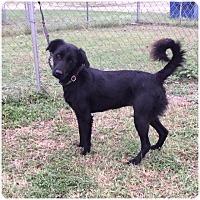 Adopt A Pet :: Meg - Comanche, TX