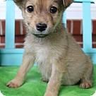Adopt A Pet :: Deeks