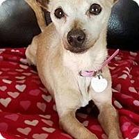 Adopt A Pet :: Adeline - San Diego, CA