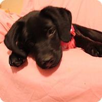 Adopt A Pet :: Cherry - Trenton, NJ