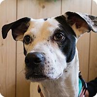 Adopt A Pet :: Ella - Glastonbury, CT