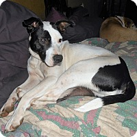 Adopt A Pet :: Dolly - North Jackson, OH