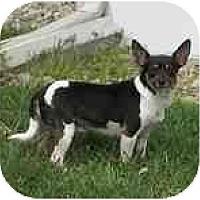 Adopt A Pet :: Hailey - Jacksonville, FL