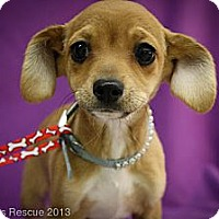 Adopt A Pet :: Tilley - Broomfield, CO