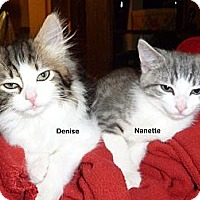 Adopt A Pet :: Nanette - Portland, OR