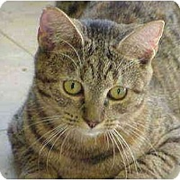 Adopt A Pet :: Clarissa - Deerfield Beach, FL