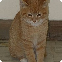 Adopt A Pet ::