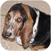 Adopt A Pet :: McKennley - Phoenix, AZ