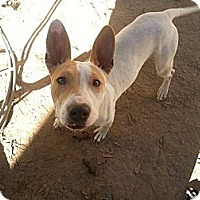 Adopt A Pet :: Gilly - New orleans, LA