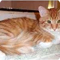 Adopt A Pet :: Kellogg - Arlington, VA