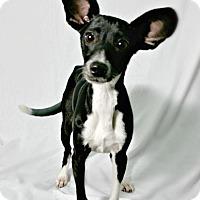 Adopt A Pet :: Issabelle - Lufkin, TX