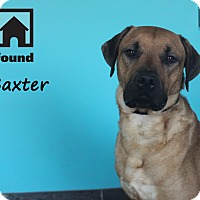 Adopt A Pet :: Baxter - Chicago, IL