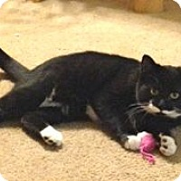 Adopt A Pet :: Katz - Colorado Springs, CO