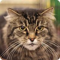 Adopt A Pet :: Kitty - Sacramento, CA