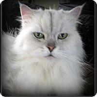 Adopt A Pet :: Josie - Gilbert, AZ